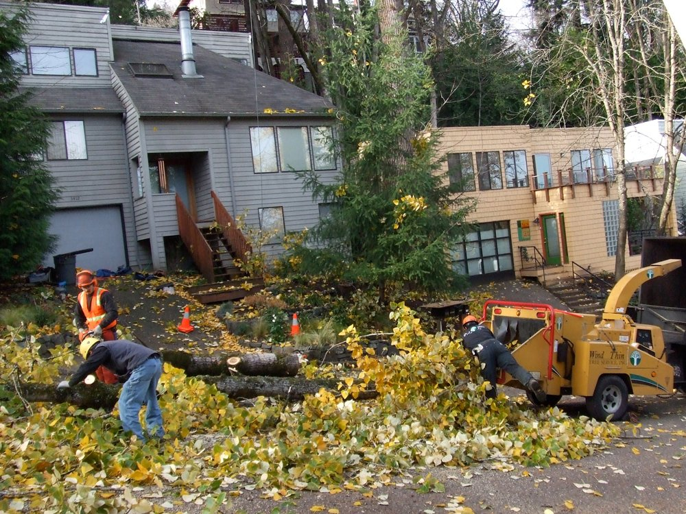 Wind Thin Tree Service Inc. image 5