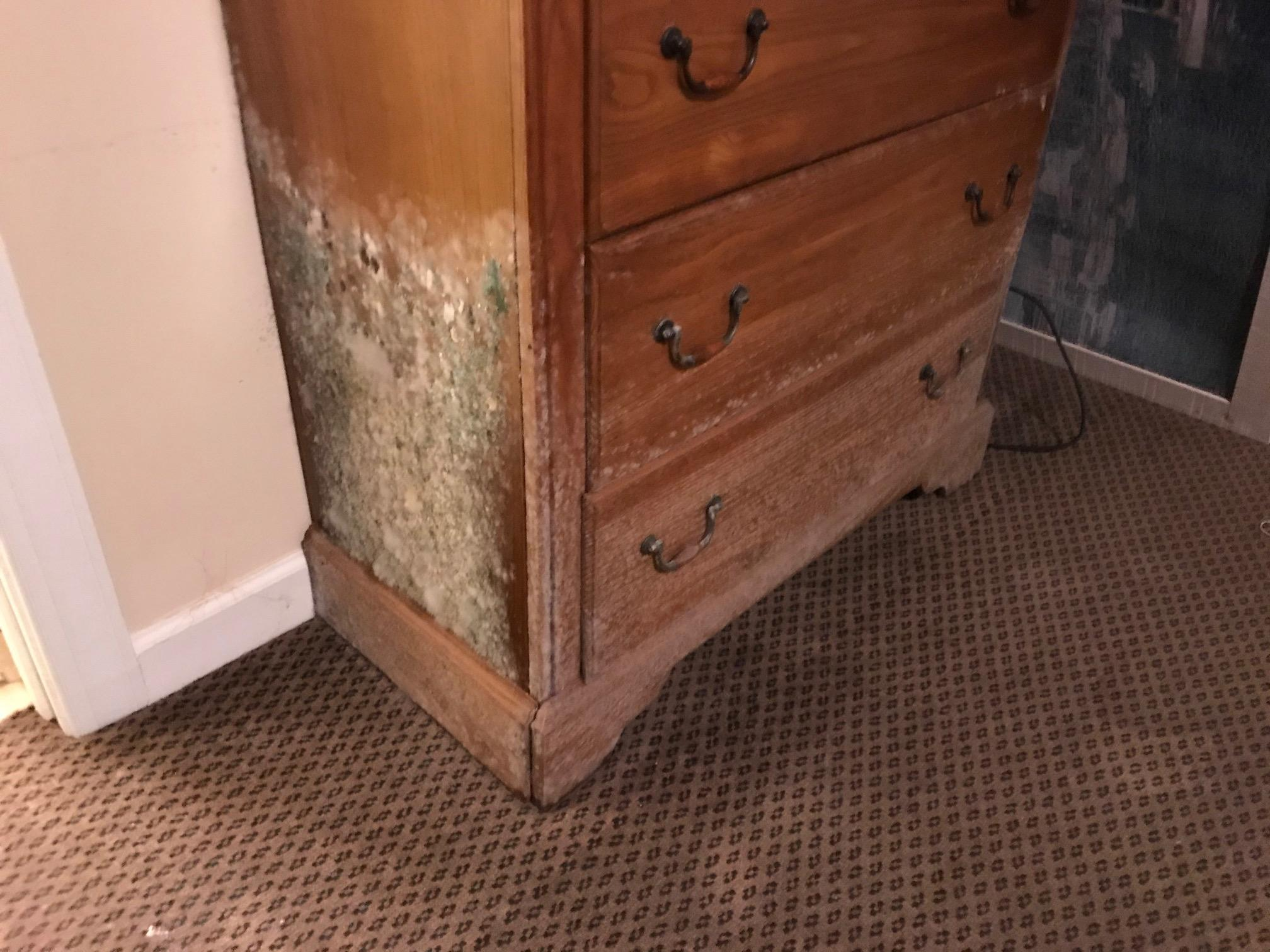 Can you spot the mold? SERVPRO of Asheville East can and we are here to help.