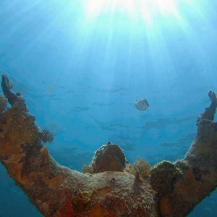 Sea Dwellers Dive Center of Key Largo image 0