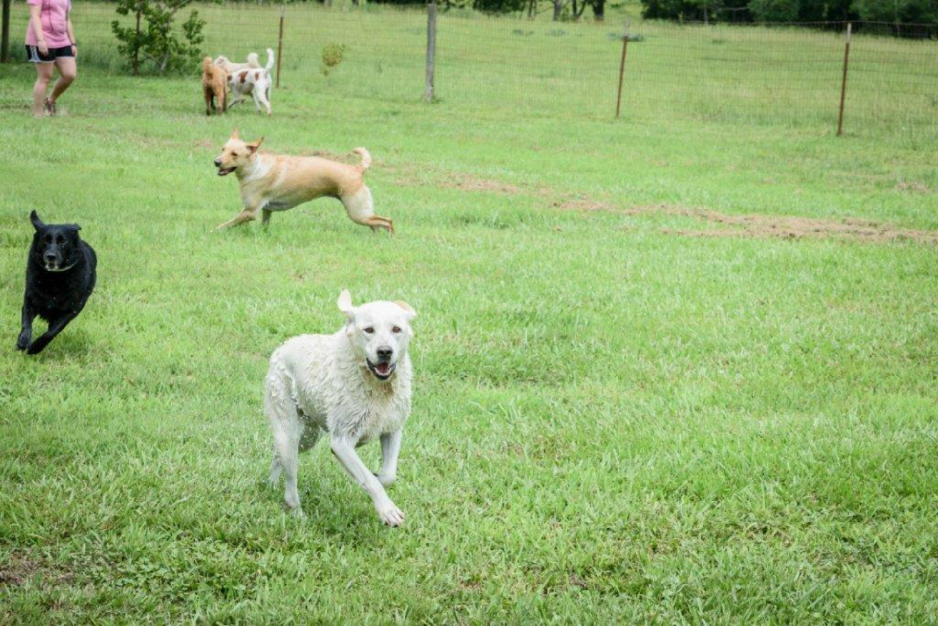 Waggin' Tails Pet Ranch image 1