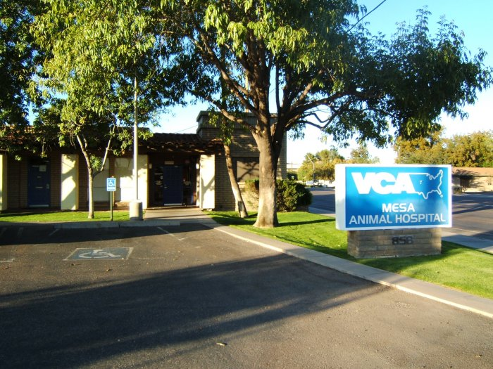 VCA Mesa Animal Hospital image 6