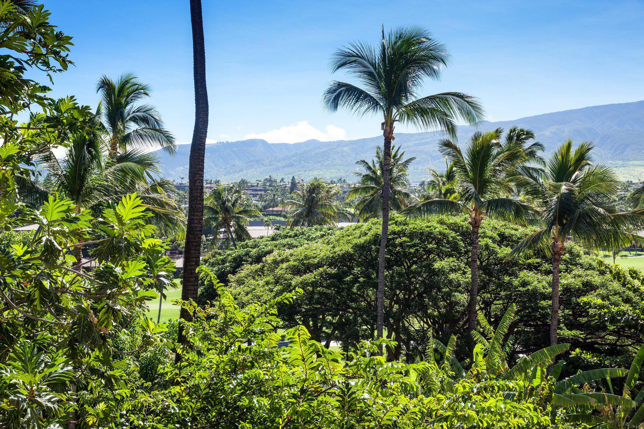 Sheraton Maui Resort & Spa in Maui, HI, photo #26