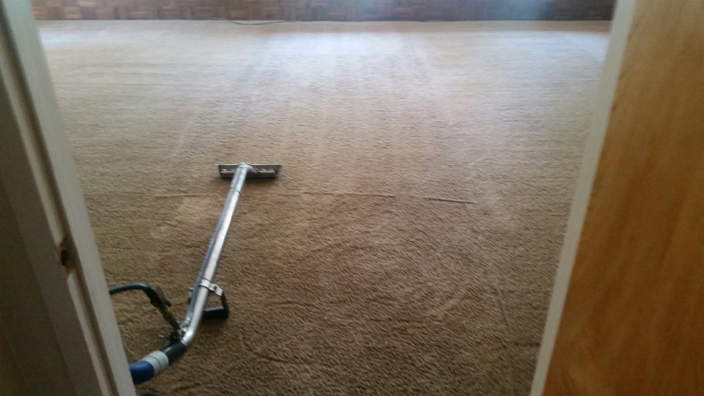 CleanDay Carpet Care image 4