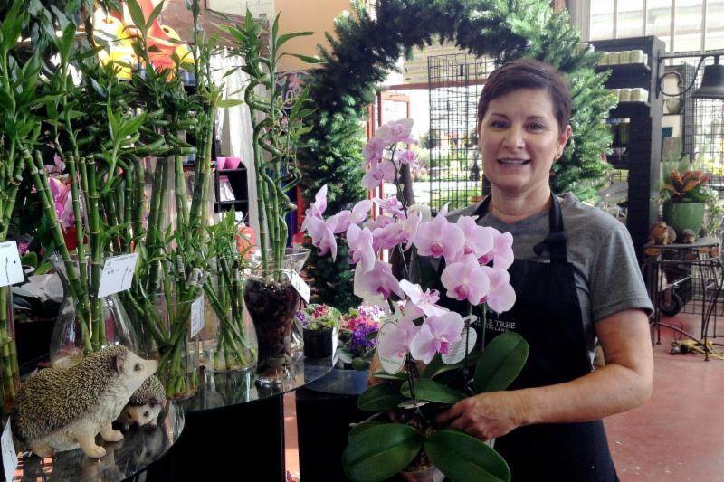 Triple Tree Nurseryland & Florist in Maple Ridge
