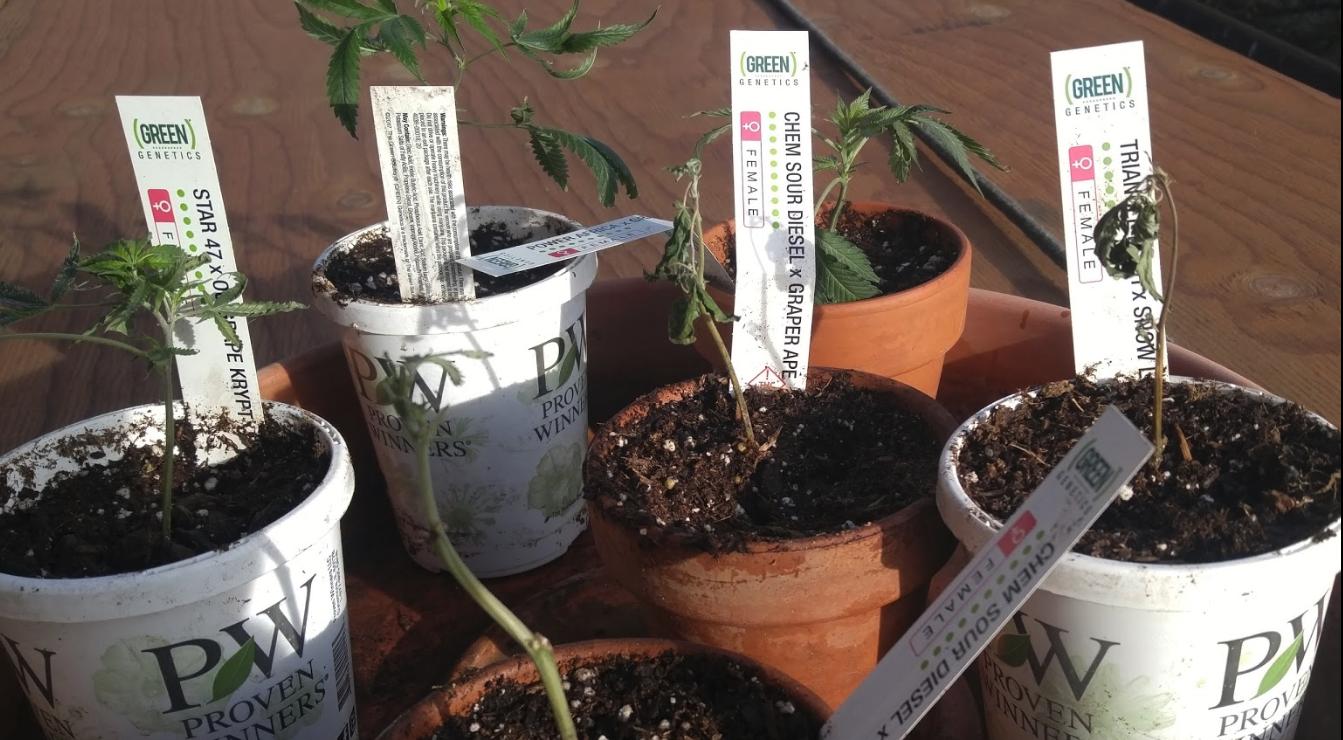 The Green Solution Recreational Marijuana Dispensary image 26