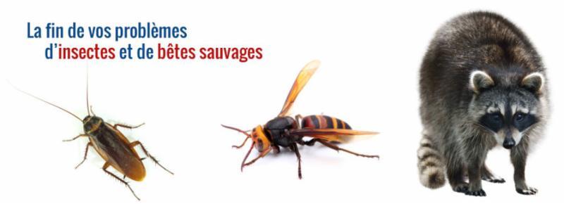 Yvon Gingras Extermination à Saint-Eustache