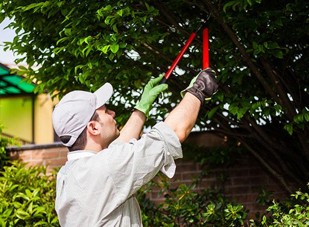 Ramirez Tree Service image 2