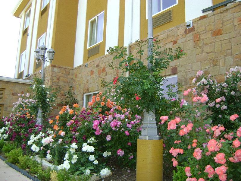 Best Western Plus Blanco Luxury Inn & Suites image 33