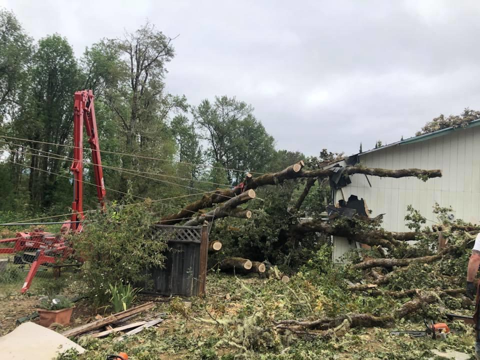 Rose Tree Service & Vegetation Management, LLC image 4