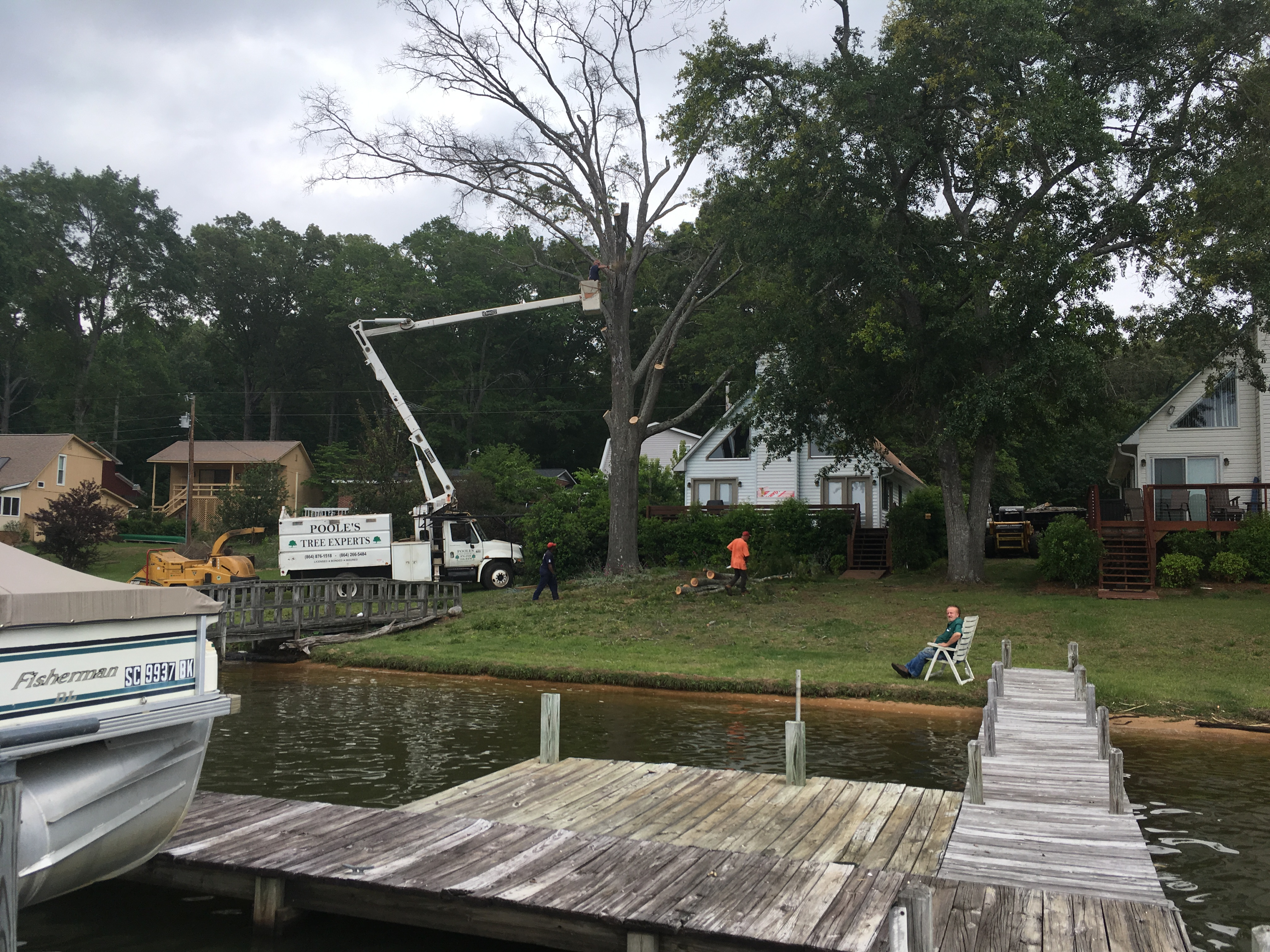 poole u0027s tree experts 1268 cook rd gray court sc tree services
