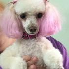 Clip N' Dip Pet Grooming image 5