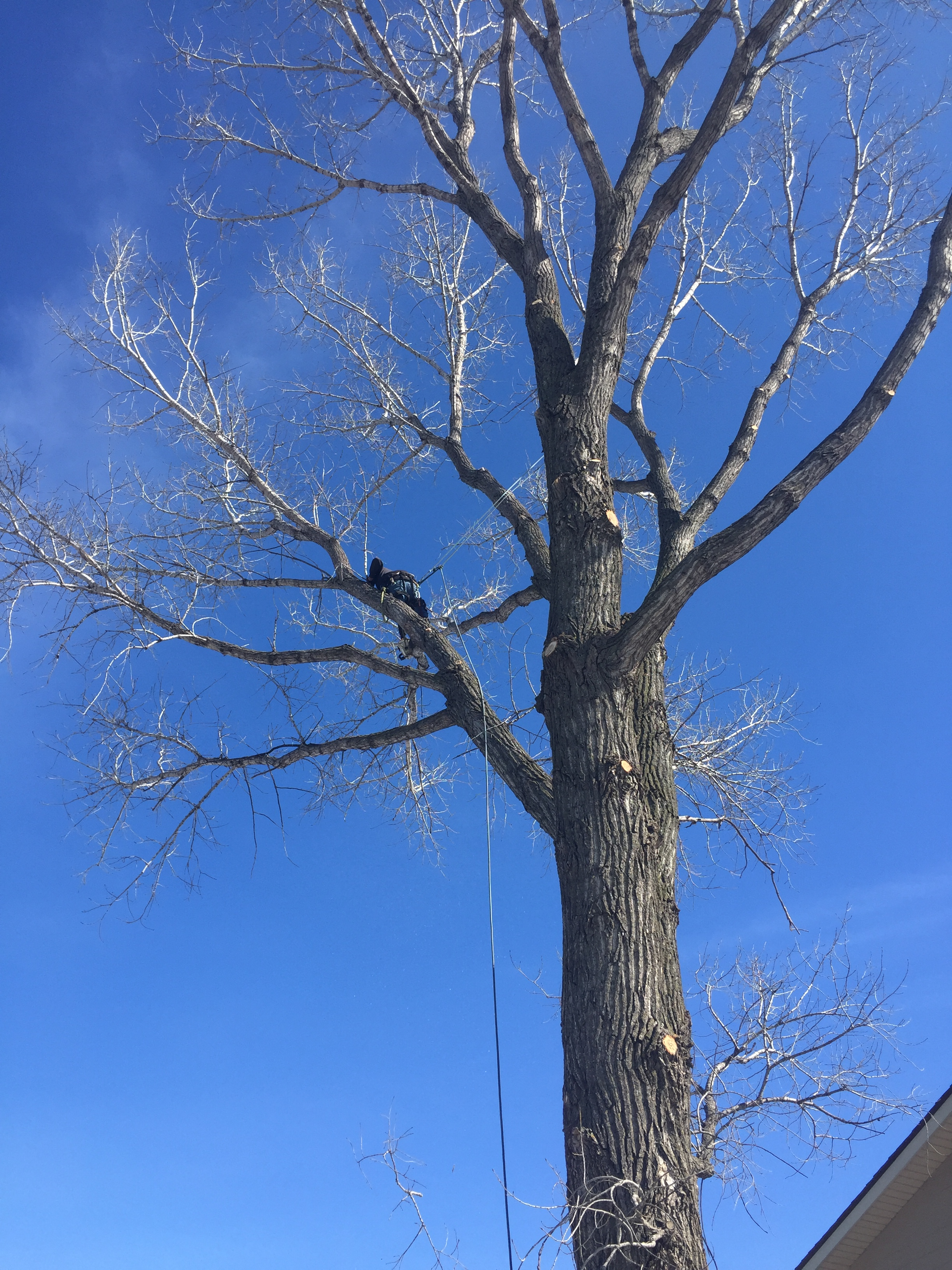 Total Tree Care image 4