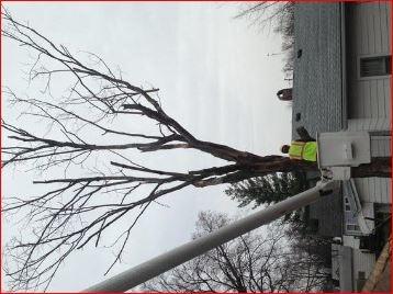 CSJ-USA Tree Service image 0