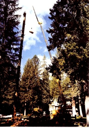 Able Tree Services image 0