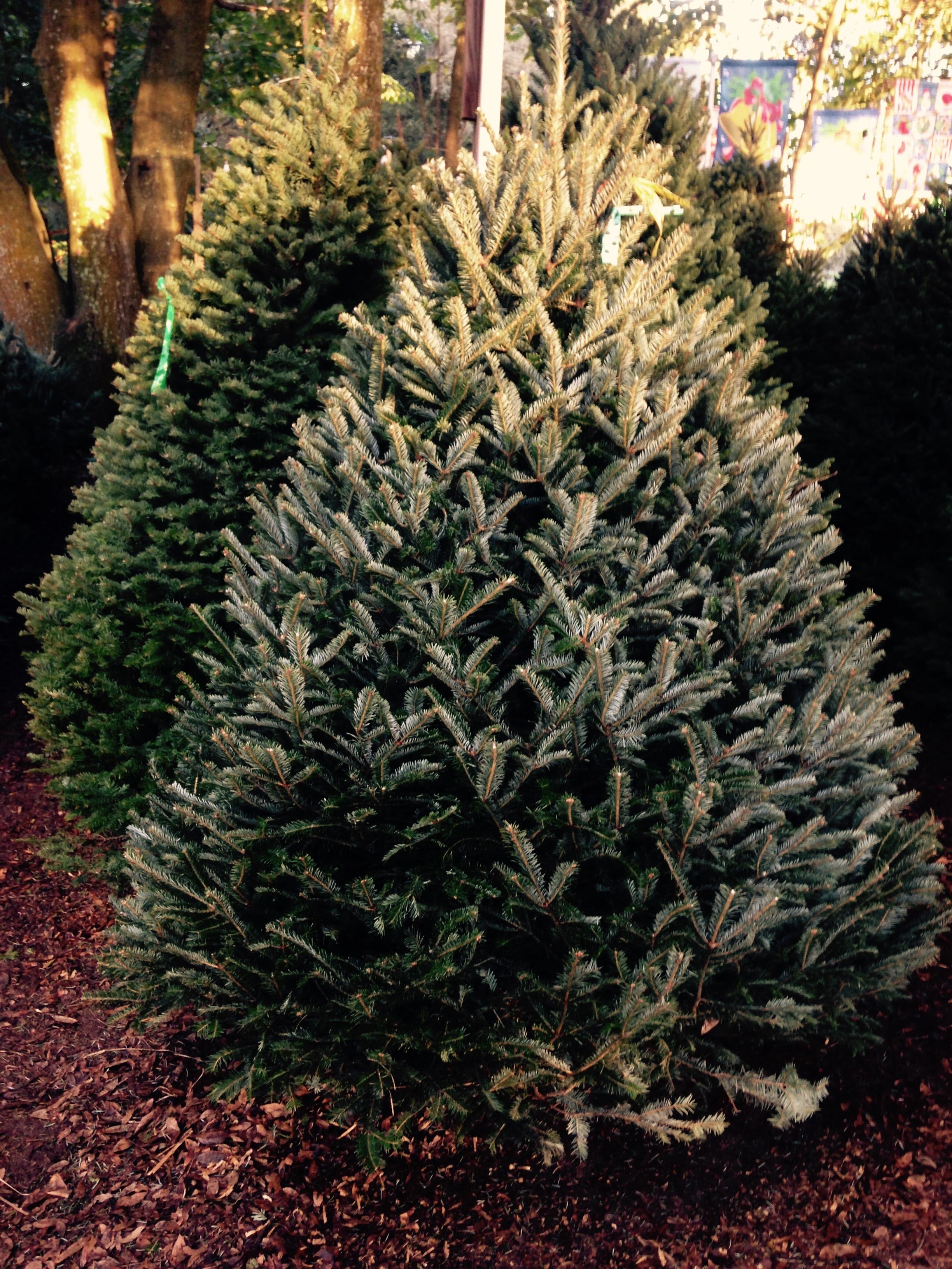 Dave's Christmas Tree Lot image 20