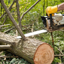 A&A Tree Service image 5