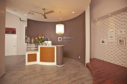 D Pet Hotels Chelsea image 3