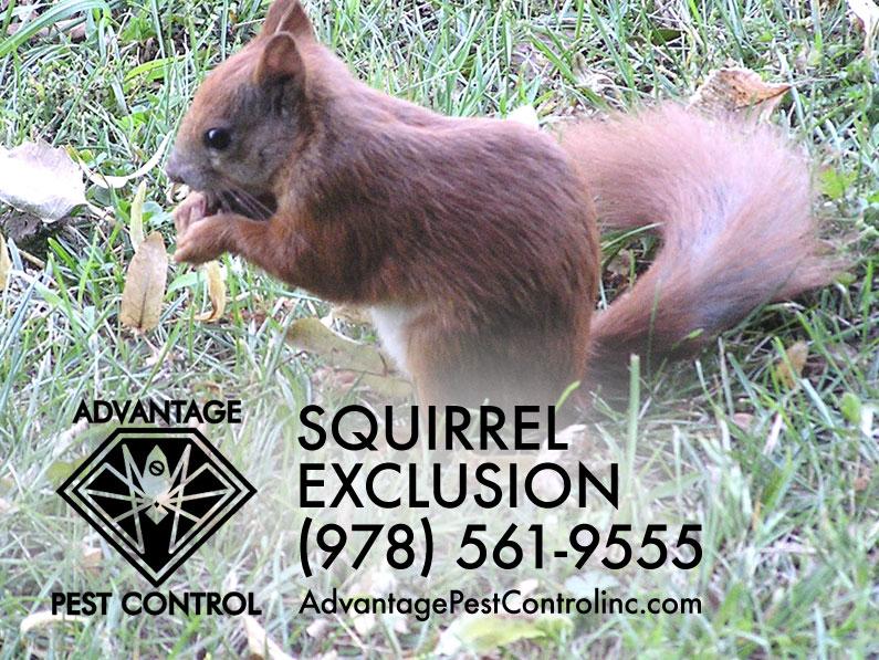 Advantage Pest Control, Inc image 7