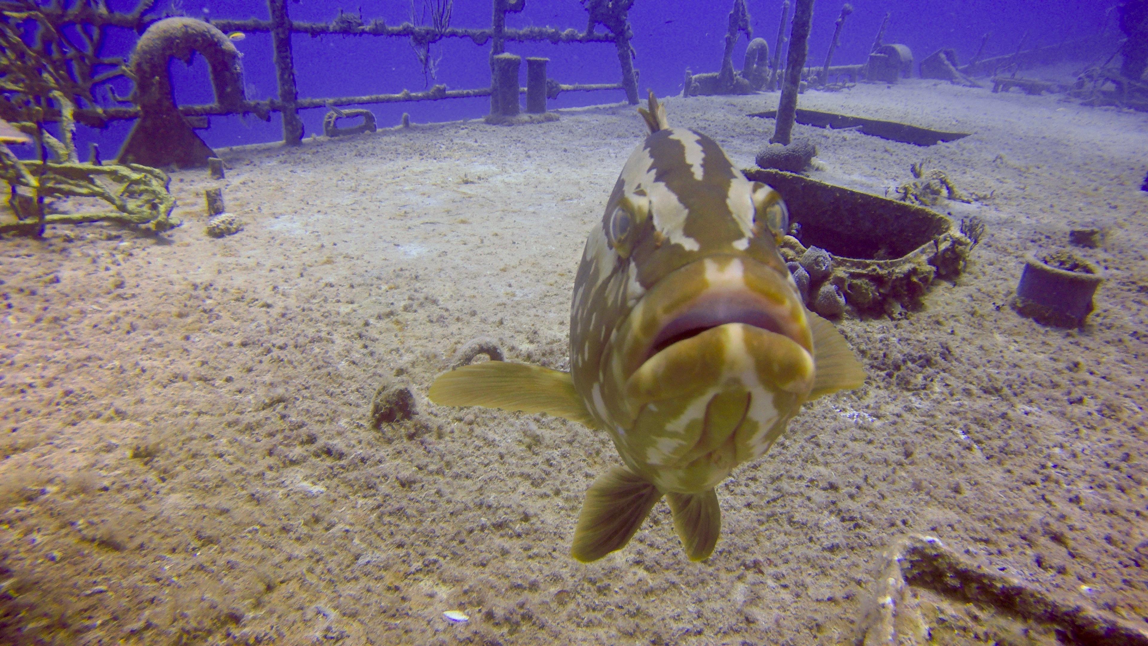 Underwater World Inc. image 1