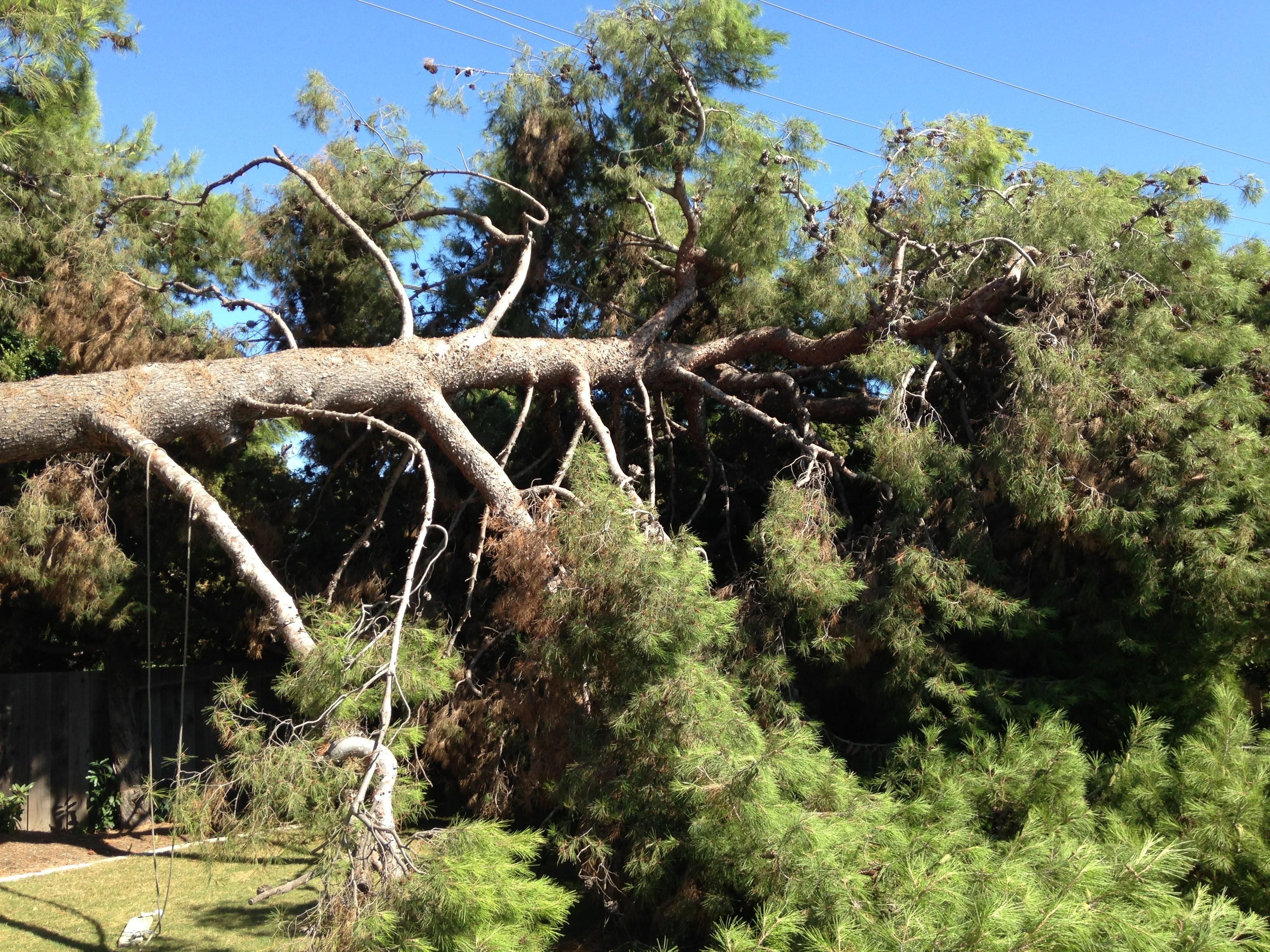 Salomon's Tree Service, LLC image 1