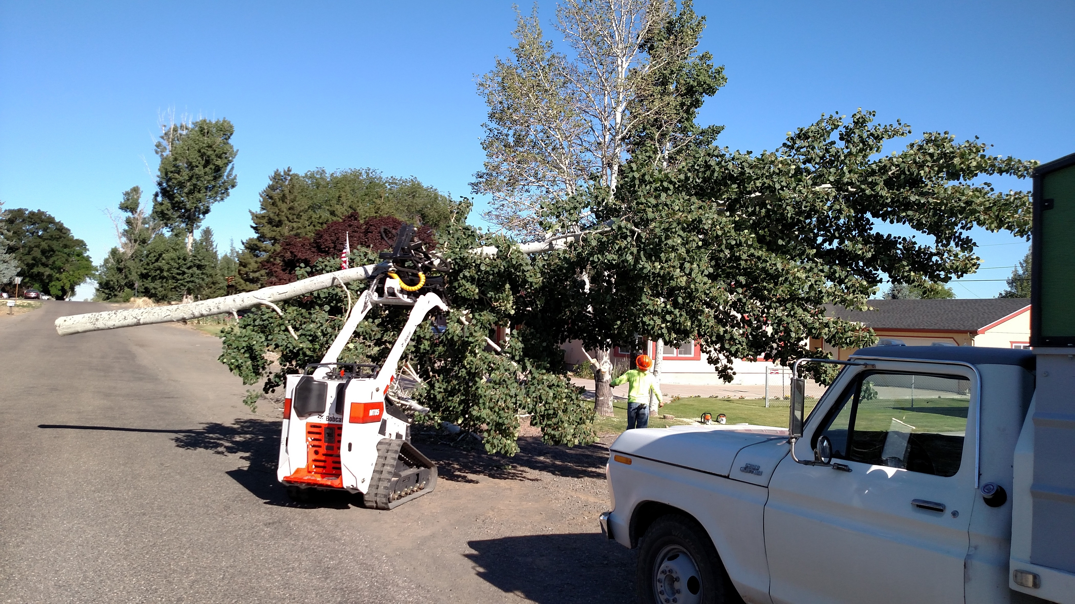 Southern Idaho Tree Specialists image 2