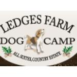 Ledges Farm Dog Camp image 13