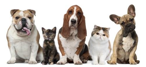 Parker Way Veterinary Clinic image 2