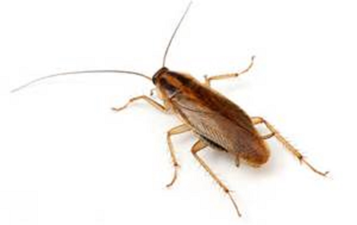 Affordable Pest Busters - ad image