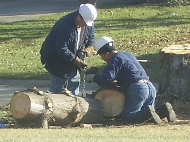Brown's Tree Service image 7