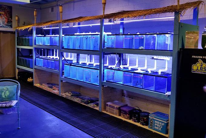 Central Indy Aquatics