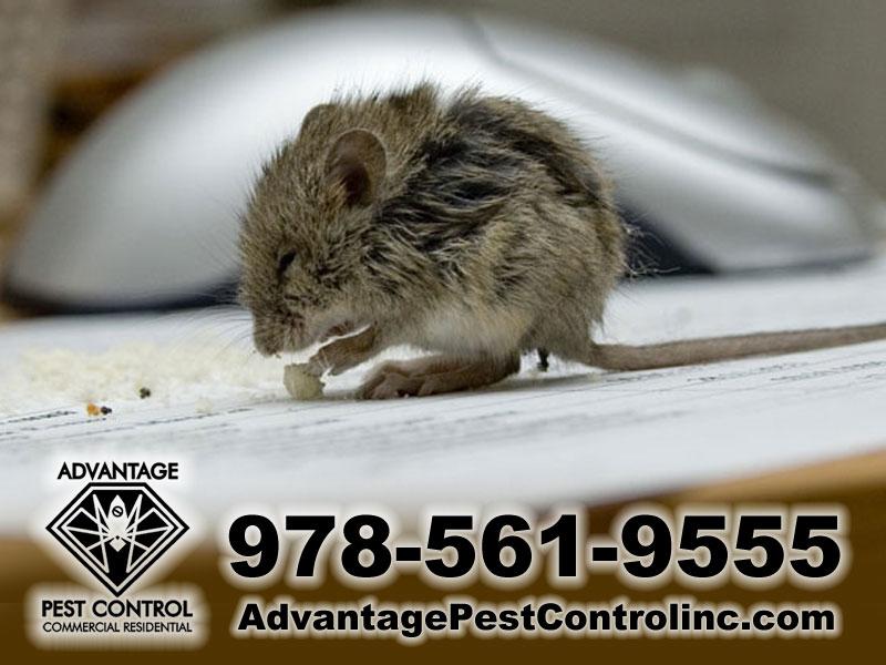 Advantage Pest Control, Inc image 6