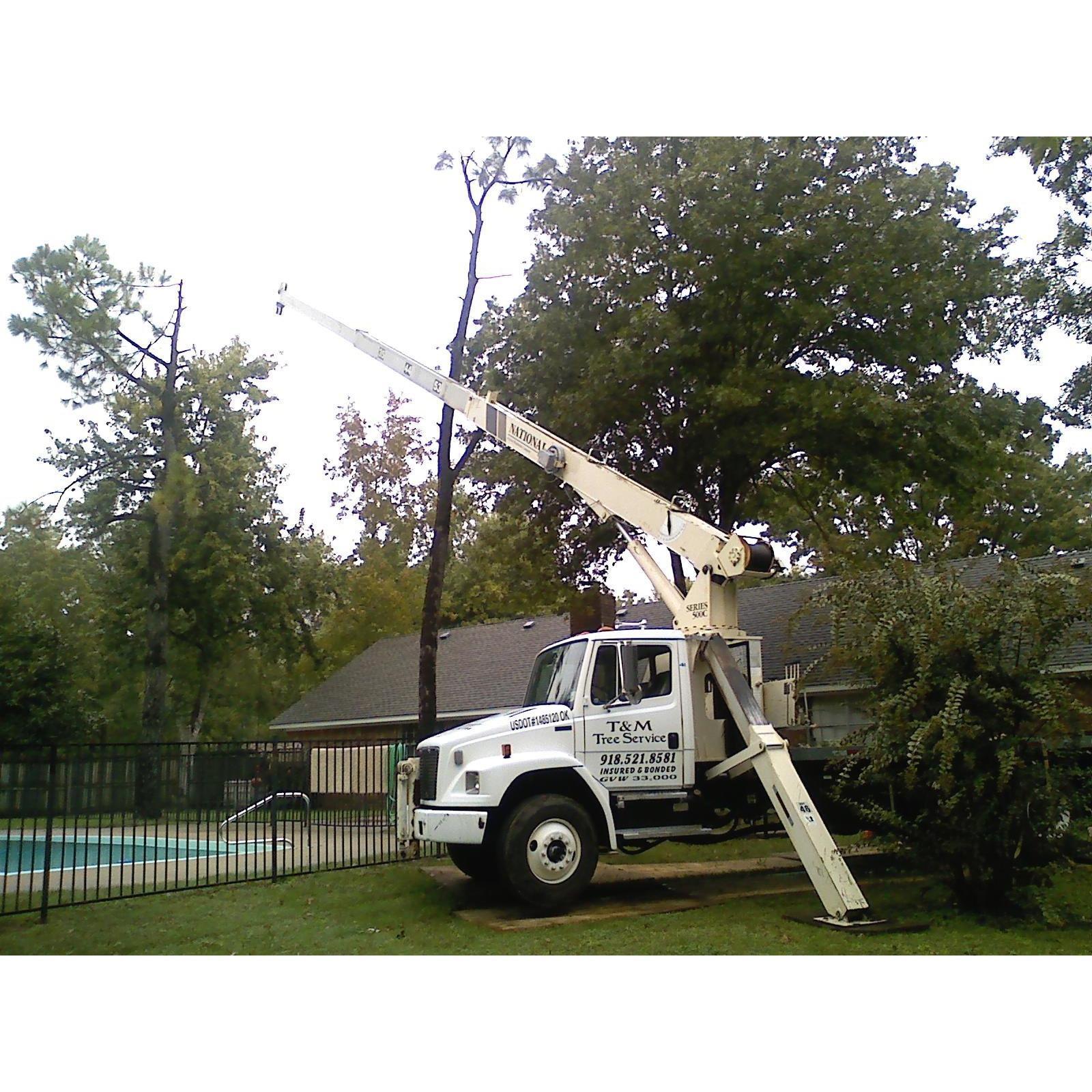 T & M Tree Service image 5