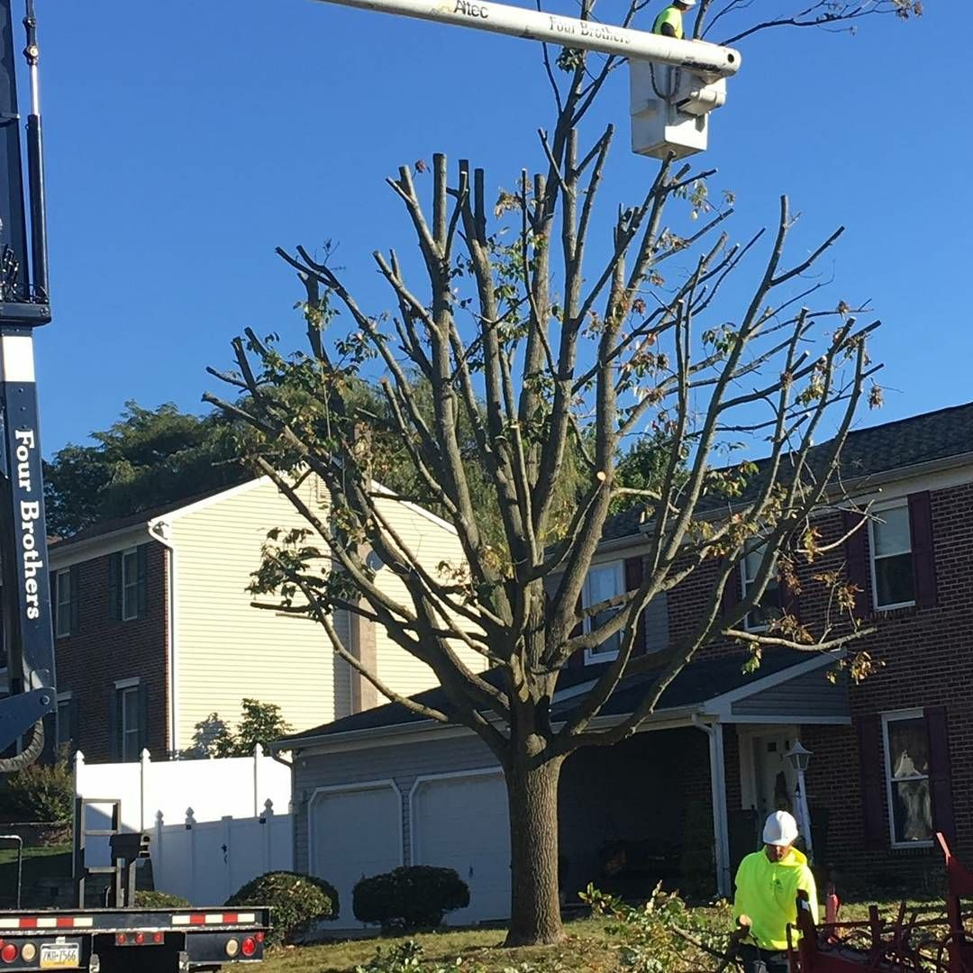 Four Brothers Tree Service Inc. image 44