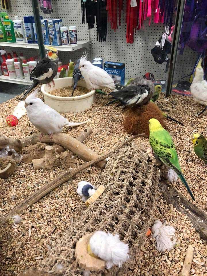 Bert's Pet Center
