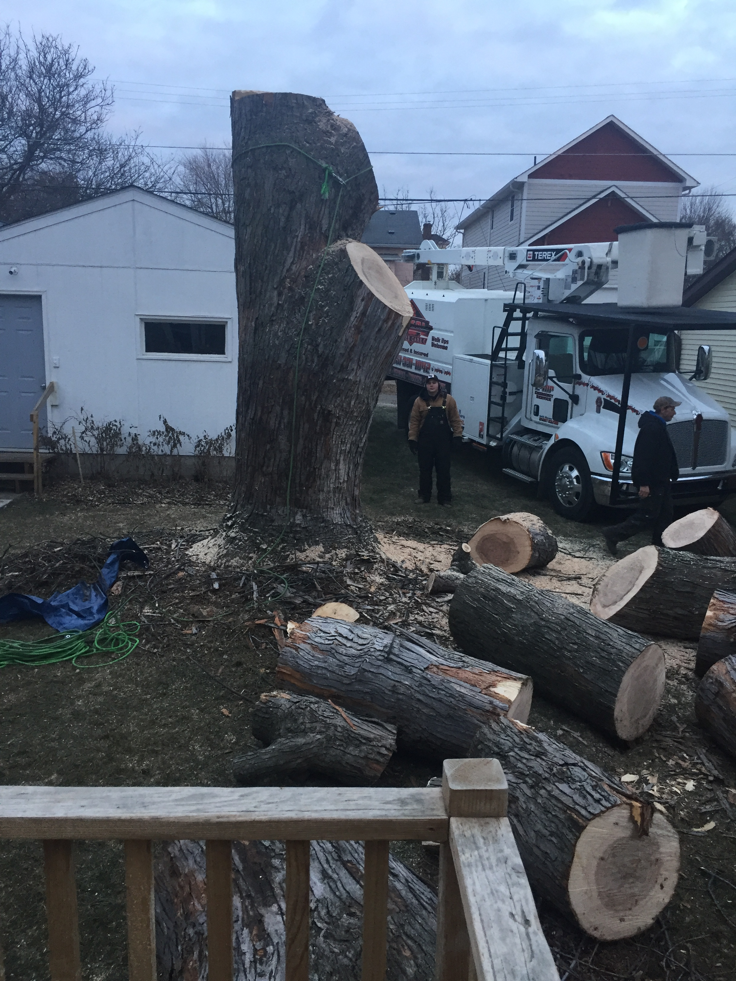 Total Tree Care image 2