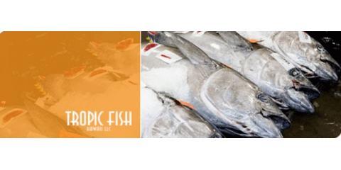 Tropic Fish Hawaii LLC image 0