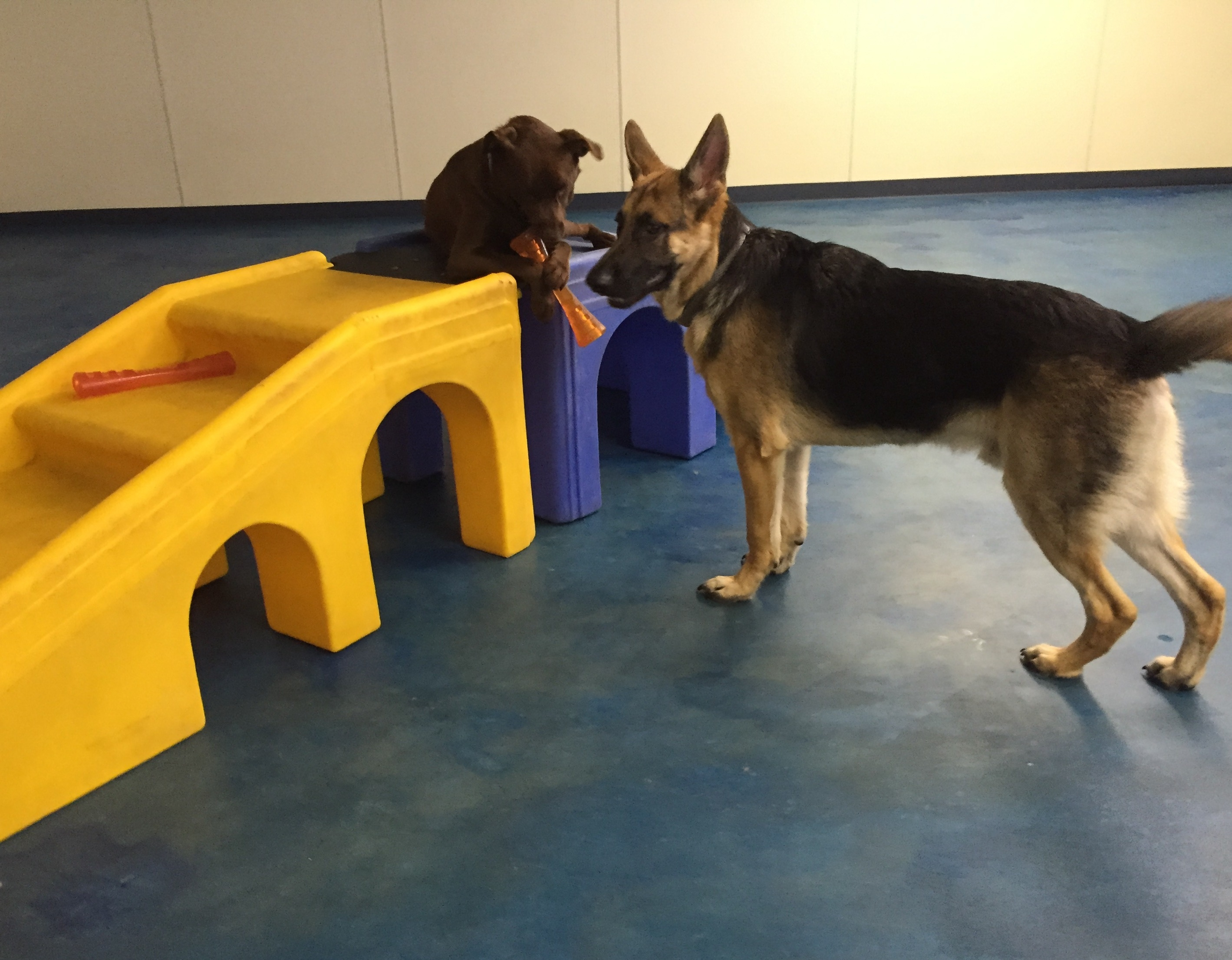 Jagger's Doggie Daycare, Dog Grooming, Training & Boarding image 9