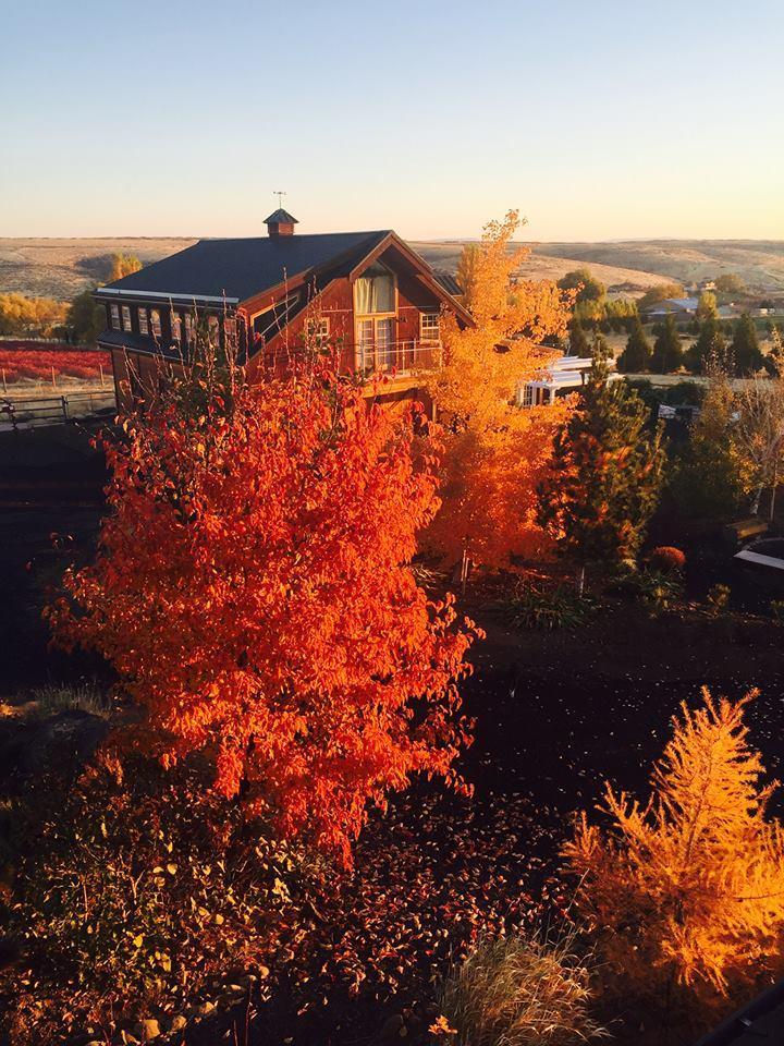 Mill Lane Winery - Yakima image 4