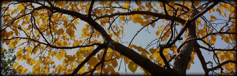 Climbing Sammy's Tree Service image 2
