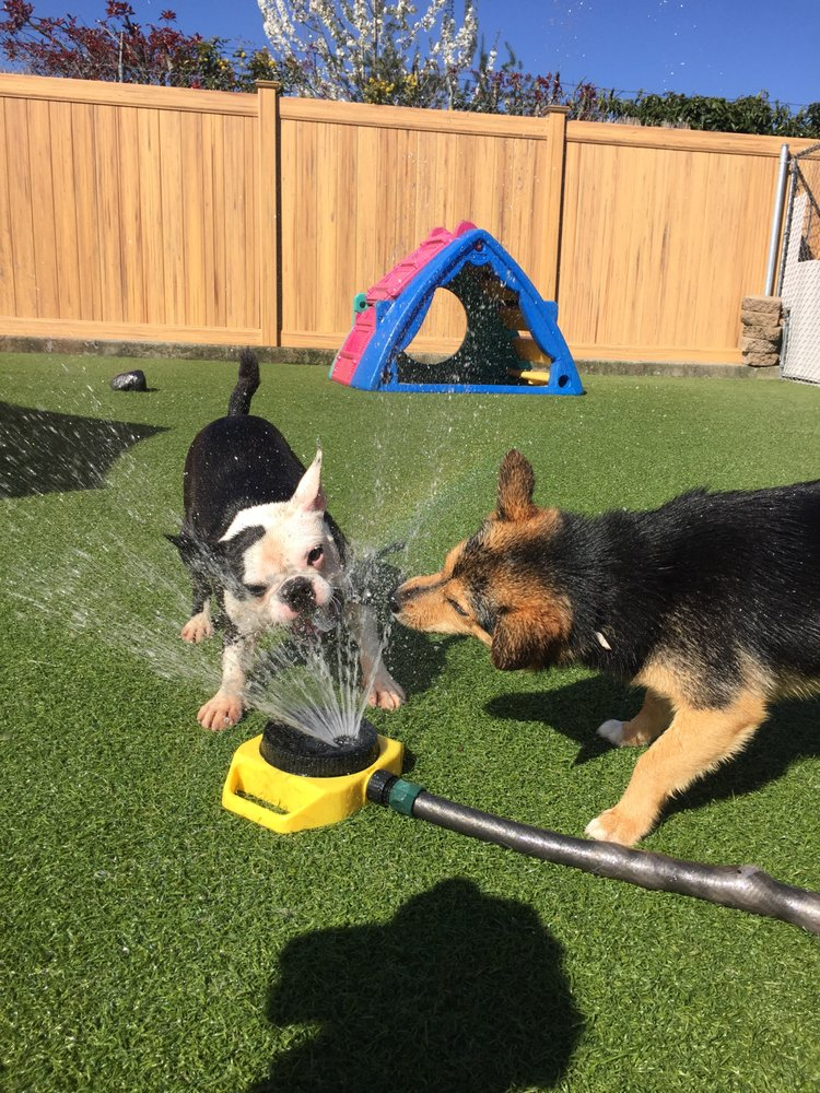 A Dog's Best Friend Doggy Daycare- East image 0