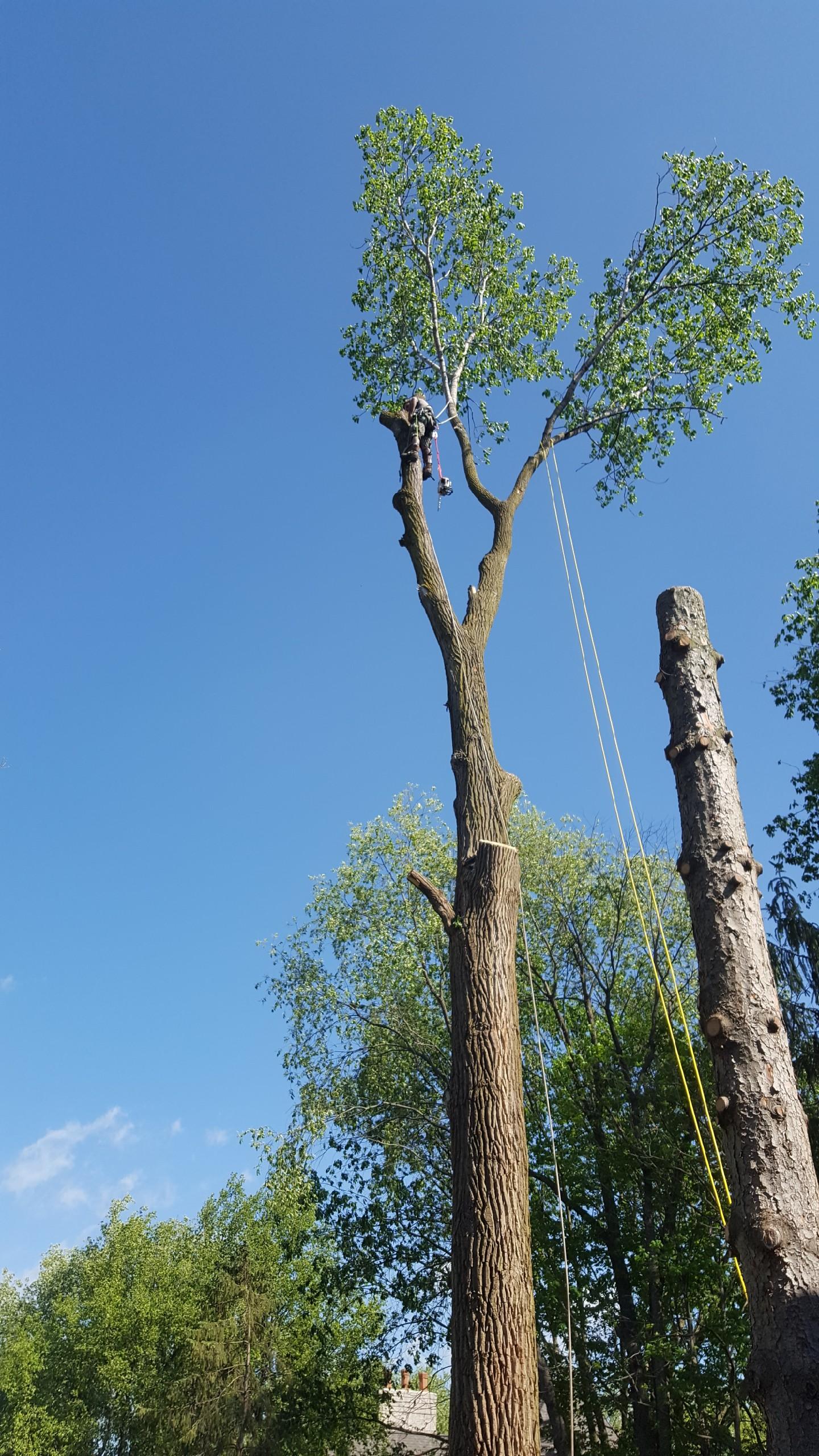 Coffman's Tree Service image 29