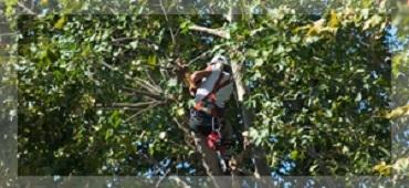 Tommy's Tree Service