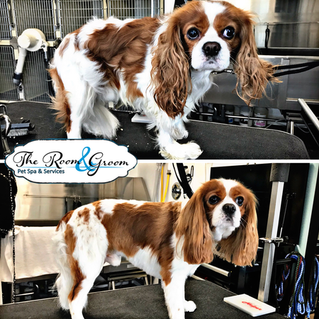 The Room & Groom, Pet Spa & Services image 46