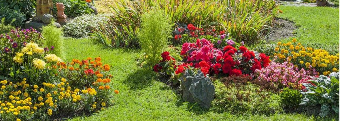 Artis Flower Hurtownia Kwiatów