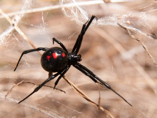 Pest Predator, LLC image 1
