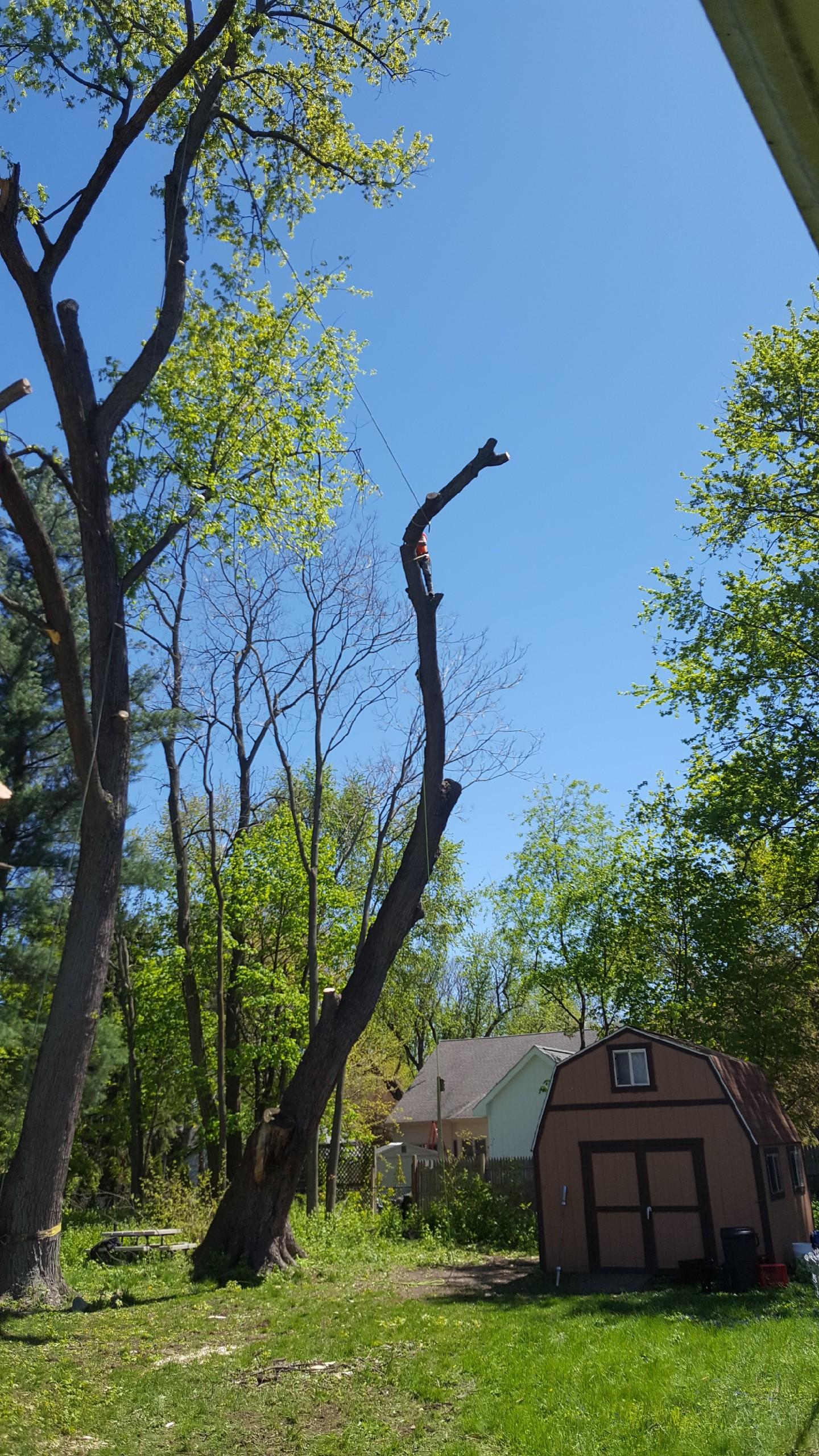 Coffman's Tree Service image 37