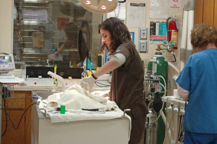 VCA Companion Animal Hospital