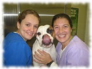 Oakton-Vienna Veterinary image 2