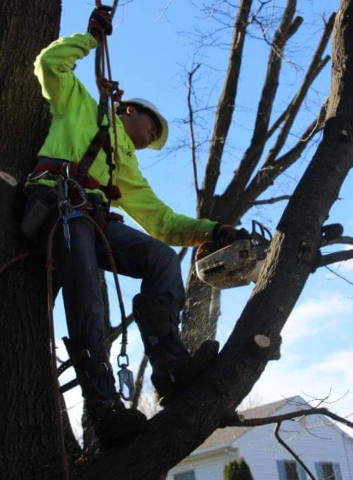 Four Brothers Tree Service Inc. image 26