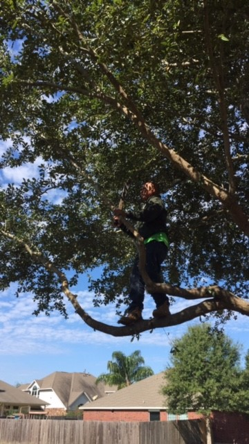 Houston Tree Removal Service image 4